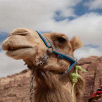 Neue Resorts für das Sultanat Oman